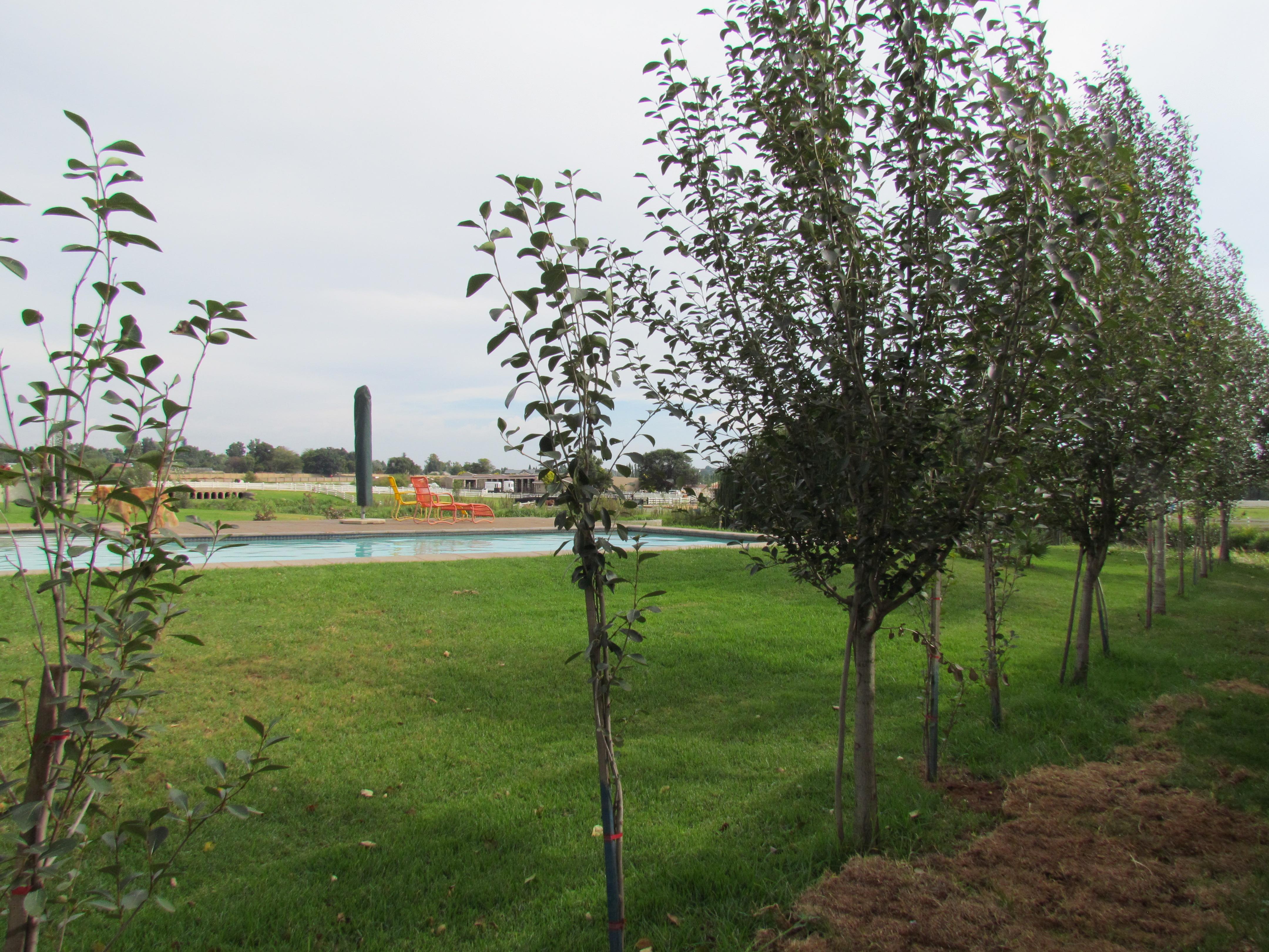 Gardens of Number 23